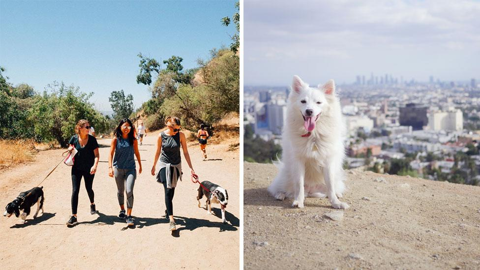 The Original Rescue Dog Hike was created by Free Animal Doctor cofounder Ryan Boyd. Photos: Supplied