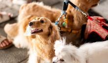 桃園2020年寵物嘉年華 打造動物友善城市