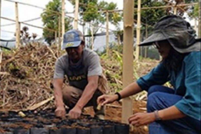 Balitbangtan kenalkan teknik baru perbenihan tebu ke petani