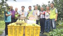 南市長視察文旦柚產銷 宣布啟動大果及加工收購