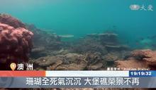 大堡礁的哀愁 海水升溫加速白化