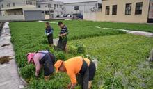 小農夫插秧夏令營 培養正確飲食習慣