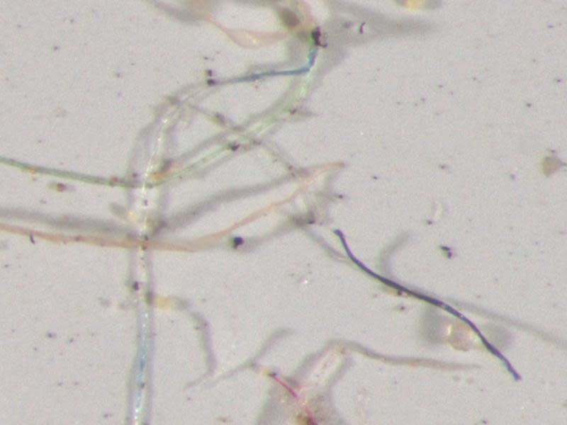 美國雨水樣本 竟發現「塑膠」