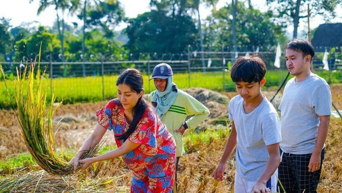 Sarwendah dan keluarga saat memanen padi. (Instagram/@sarwendah29)