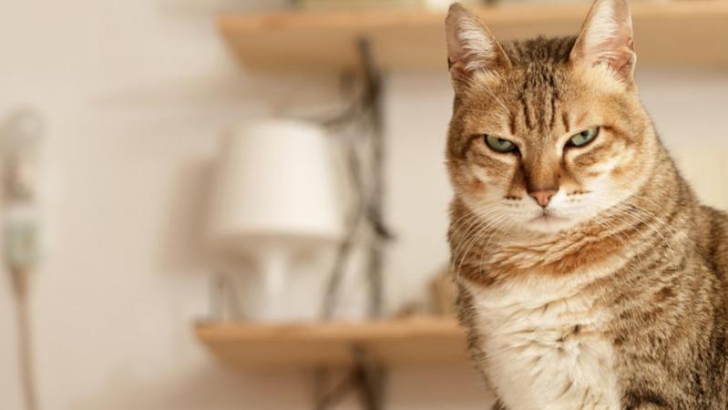 貓奴相信嗎?貓咪識記得主人返屋企時間。