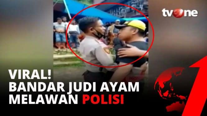 Pong Belo Raja Judi Ayam yang Viral Ancam Polisi Kini Pasrah Ditangkap