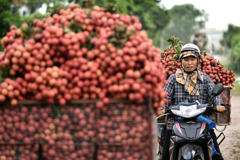 Foreign buyers tend to come directly to the market -- just a few hours drive from the Chinese border -- during the fruit's short six-week season