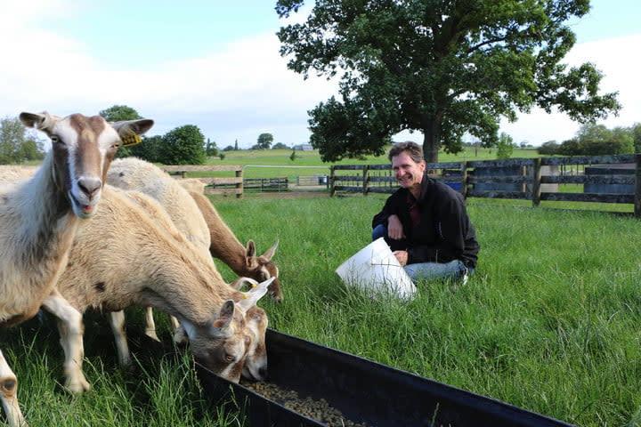 Goetz-and-goats