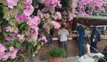 紫藤花攀附早餐店屋簷 形成花牆超美吸睛