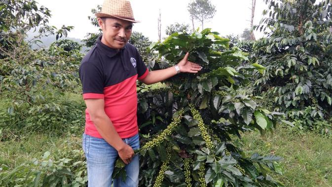 Enjang menunjukan satu pohon jenis kopi java Peranger dengan biji yang sangat banyak dan cukup besar (Liputan6.com/Jayadi Supriadin)