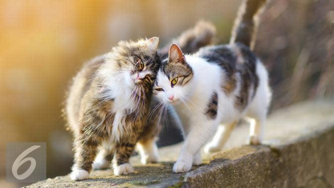 Ilustrasi Kucing (iStockphoto)
