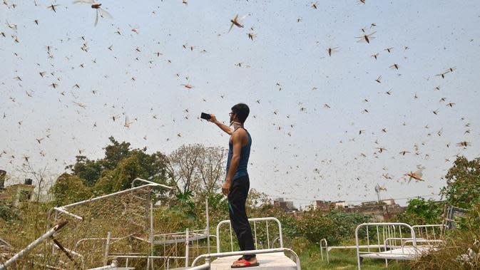 Seorang pria mengambil gambar kawanan belalang di area pemukiman Allahabad, Allahabad, India (11/6/2020). Warga dikejutkan dengan munculnya segerombolan belalang yang menyerbu permukiman di daerah tersebut. (AFP/Sanjay Kanojia)