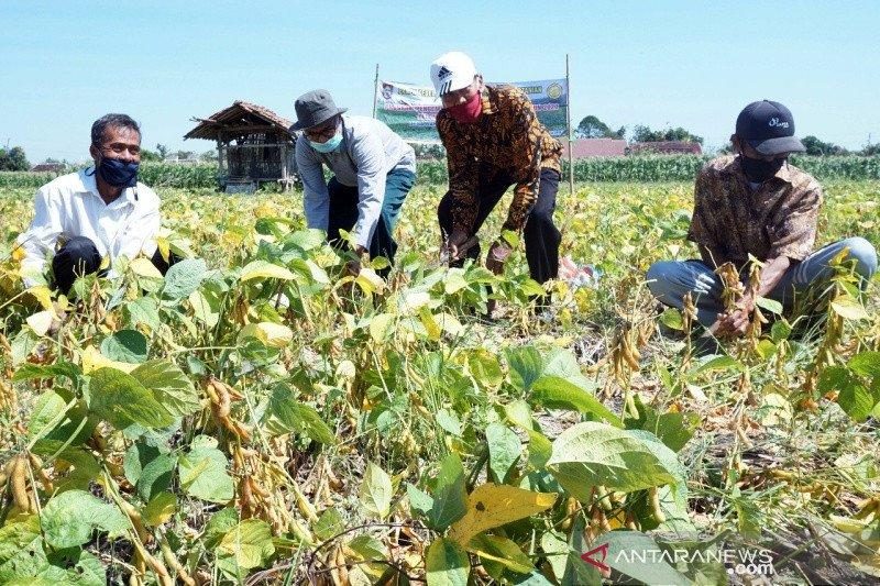 Boyolali kembangkan tanaman kedelai di 11 kecamatan