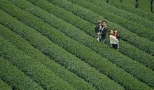 到坪林來趟茶園秘境 親子一日遊