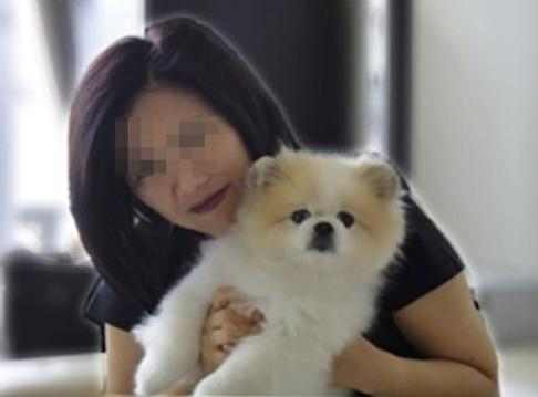 Benny the Pomeranian was infected with the coronavirus and later died, although his age and pre-existing health issues were deemed more relevant for his passing. Photo: Facebook
