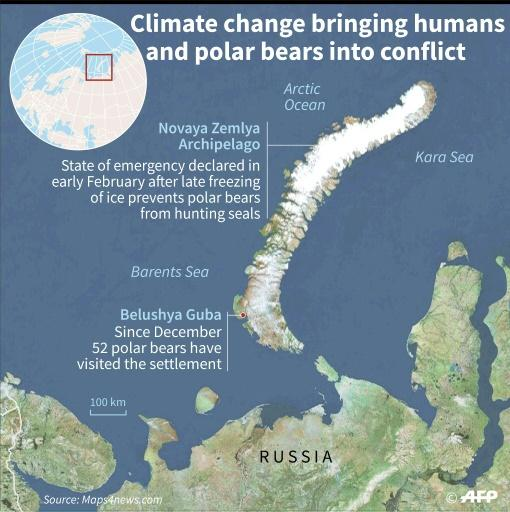 In the Novaya Zemlya archipelago, climate change and new infrastructure projects are bringing humans and polar bears into conflict