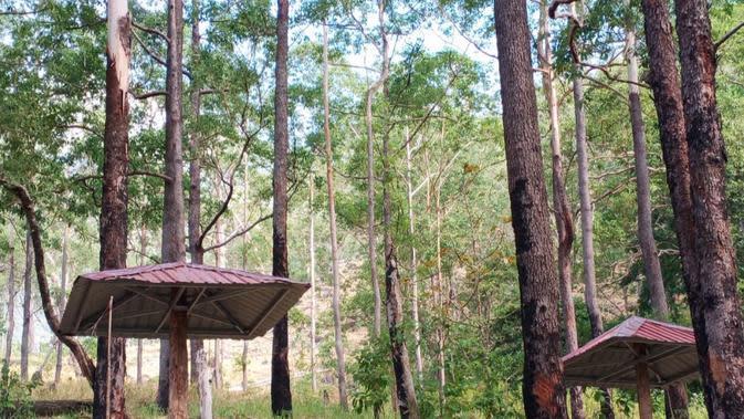Hutan Lindung Egon Berbenah Jadi Destinasi Wisata Minat Khusus Kelas Dunia