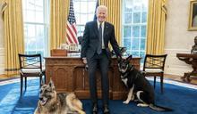 拜登愛犬又亂咬人 才回老家受訓隔週攻擊白宮職員