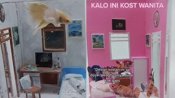 Akuarium Ikan Cupang Bak Kamar Kos (Sumber: TikTok/@fishkinianofficiallive/
