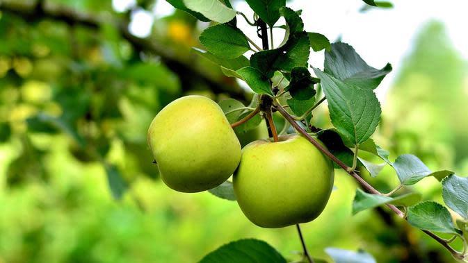 Apel Hijau / Sumber: Pixabay