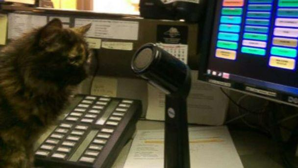 Stray Kitten Helps Police Dispatchers