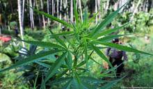 美國數州公投支持毒品管制改革