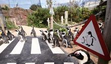 動物園倒閉危機 疫情下反思存廢契機