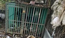 毛小孩住在垃圾堆 嘉縣飼主遭罰3千元