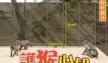 護猴高身膠擋板贏盡市民掌聲 漁護署執迷不悟竟拒用