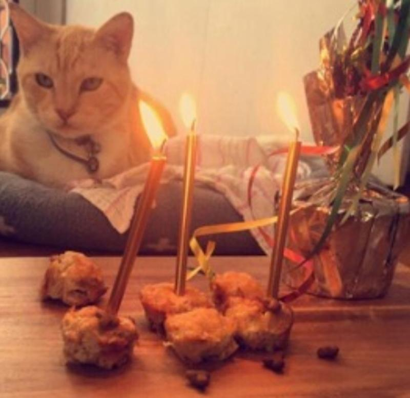 Charlie the cat pictured with candles for his birthday.