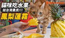 貓咪肯吃水果?網友實測畫面超療癒