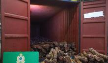 【今年最大宗】海關查抵港貨櫃 檢市值近600萬元走私紫檀木