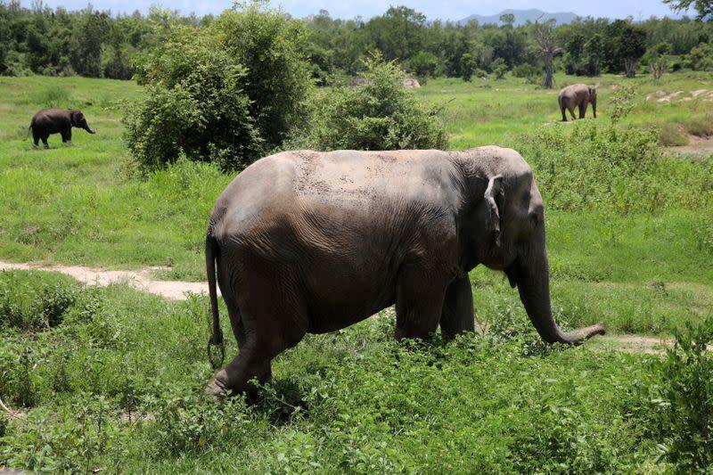Yayasan penampungan hewan Thailand memperingatkan peningkatan dampak pandemi pada hewan