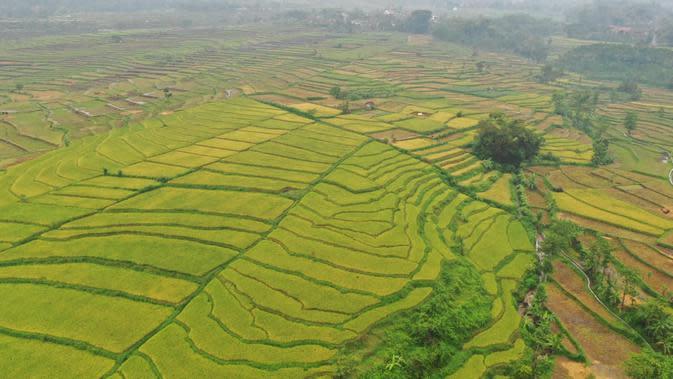 Lahan Pertanian Produktif di Ngawi Berkurang 50.197 Hektare, Ada Apa?