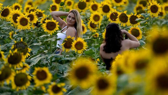 Seorang perempuan berfoto di ladang bunga matahari di Grinter Farms, dekat Lawrence, Kansas pada 7 September 2020. Ladang seluas 26 acre yang ditanam setiap tahunnya oleh keluarga Grinter itu menarik ribuan pengunjung selama akhir musim panas saat mekarnya bunga matahari. (AP Photo/Charlie Riedel)