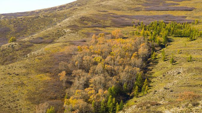 Pemandangan musim gugur di Taman Hutan Nasional Hadamen, Hohhot, Daerah Otonom Mongolia Dalam, China utara, 5 Oktober 2020. (Xinhua/Peng Yuan)