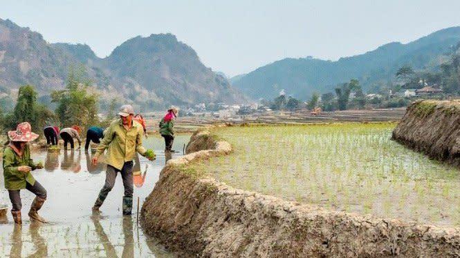 Kesejahteraan Petani dalam Menyongsong Ketahanan Pangan 2021