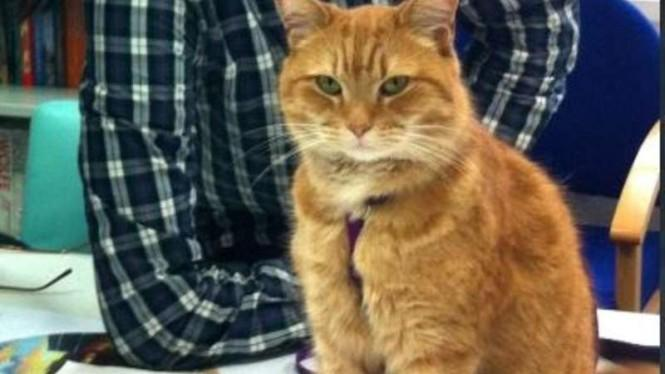 Kucing Picu Toksoplasma, Bahayanya Sampai ke Otak