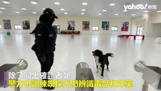 阿聯超強嗅探犬組機場新冠病毒快篩部隊 準確率達98.2%