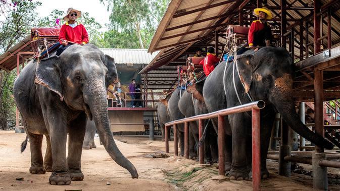 Mahout atau pawang bersama gajah mereka menunggu turis yang datang di Taman Chang Siam, Pattaya, Thailand, Rabu (12/2/2020). Chang Siam Park adalah salah satu primadona bagi wisatawan China di Pattaya yang kini berangsur sepi karena penyebaran virus corona covid-19. (Mladen ANTONOV / AFP)