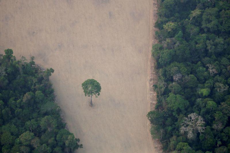 Brazil luncurkan operasi militer untuk lindungi Amazon