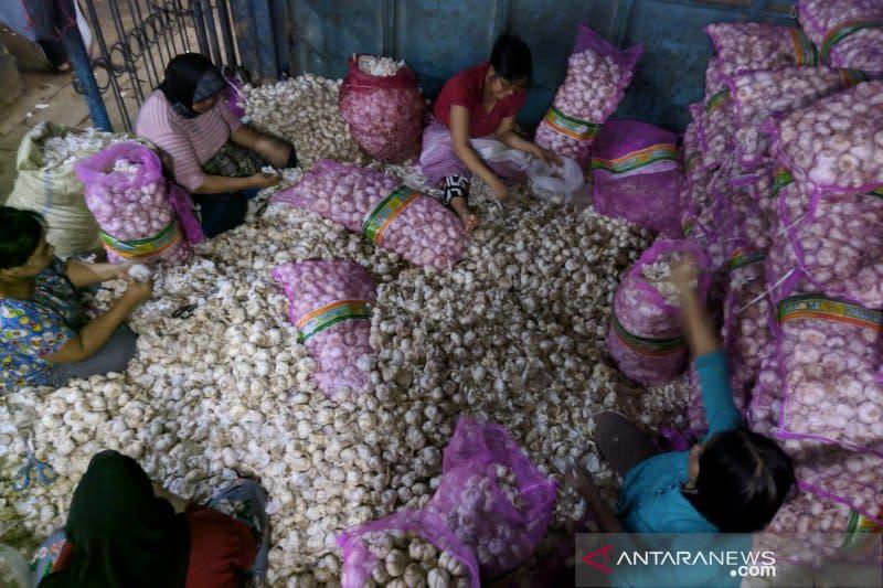Peneliti harapkan pembenahan koordinasi untuk izin impor bawang putih