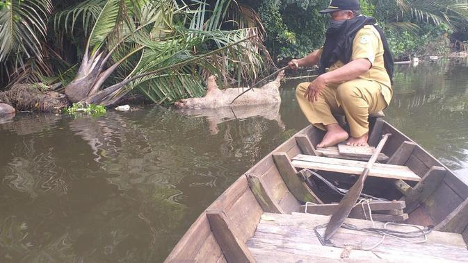 Angka Kematian Babi Tembus 5.800 Ekor, Sumut Darurat Hog Cholera