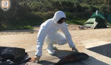 南丫島東澳發現年幼豚屍 運返海洋公園化驗