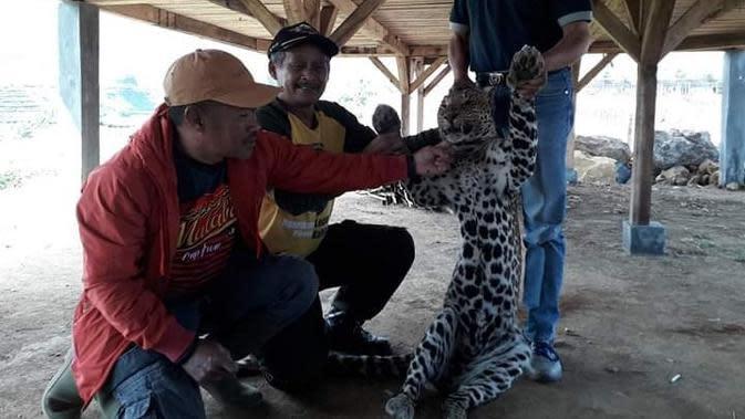 Anggaran Menipis, Kebun Binatang Bandung Akan Jadikan Rusa Pakan Macan Tutul
