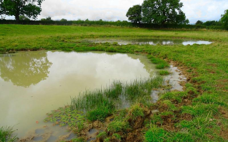Researchers monitored nine ponds over 20 years - PA