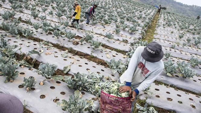 BPS Catat Upah Buruh Harian Naik Tipis pada September 2020