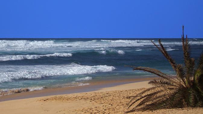 Hawai (Liputan6/Pixabay)