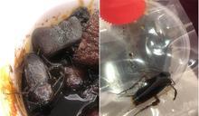 柴灣富臨豬腳薑暗藏巨型曱甴 食客驚呼:未見過咁大隻
