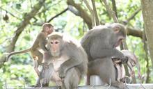 壽山公園猴諧和諧宣傳片獲國際影展肯定(1) (圖)